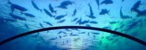 Unterwasser Ferienwohnung